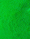 Macro shoot of green hard coral Royalty Free Stock Image