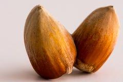 Macro shoot of unpealed dual hazelnut. On white backgound stock image