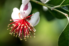 Macro shooting red and white flowers. Macro drawn flowers on branches Royalty Free Stock Images