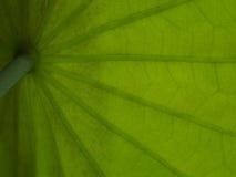 Macro shortthe green leaves and is backlit streaks. Stock Photo