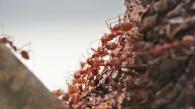 Macro shot of ant activity Stock Images