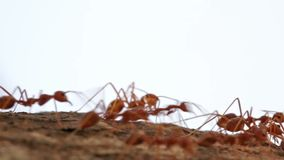 Macro shot of ant activity Royalty Free Stock Images
