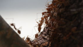 Macro shot of ant activity Royalty Free Stock Photo