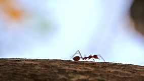 Macro shot of ant activity Stock Photography