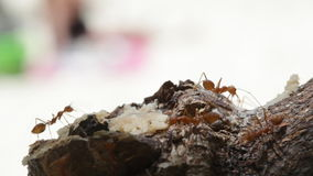 Macro shot of ant activity Royalty Free Stock Image