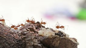 Macro shot of ant activity Royalty Free Stock Photos