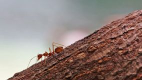 Macro shot of ant activity Stock Photos