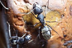 Ants climbing Royalty Free Stock Photo