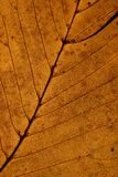 Closeup on Autumn Leaf Royalty Free Stock Images