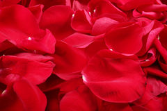 Macro shot of background of red rose petals Stock Photography