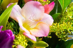 Macro shot of beautiful pink lily Royalty Free Stock Photos