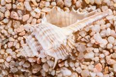 Macro shot of beautiful seashell Stock Photos