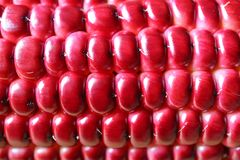 Macro shot of the beautiful vibrant magenta color of purple corn kernels on the cob. Texture Background royalty free stock photos