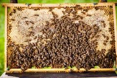 Macro shot of bees Royalty Free Stock Photography