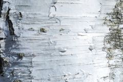 The macro shot of birch bark texture or background royalty free stock photos