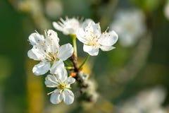 Springtime Stock Photography