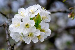 Springtime Stock Photos
