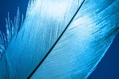 Macro shot a blue bird feather close-up stock photography