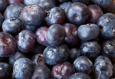 Macro shot of Blueberries Royalty Free Stock Photos