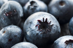 Macro shot of blueberries Royalty Free Stock Photography