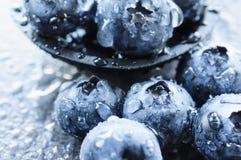 Macro shot of blueberries Stock Photography