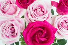 Macro shot of bouquet og roses. Bouquet of light and dark fresh cut pink roses view from the top Stock Images