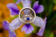 Macro shot of a bride and grooms rings in a purple flower after the rain royalty free stock photo
