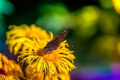 Macro shot of a butterfly sitting on a blossom. In the garden on a sunny summer day on a bright and colorful background Stock Image