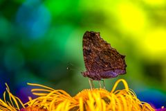 Macro shot of a butterfly sitting on a blossom. In the garden on a sunny summer day on a bright and colorful background Stock Photo