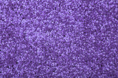 Macro shot of a carpeting texture background. Textile floor covering. Violet Knotted-pile carpet Royalty Free Stock Images