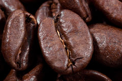 Macro shot of a coffee bean Stock Photography