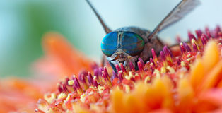 Macro shot of colorful wild fly Stock Photos