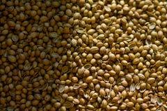 Macro shot or coriander seeds Royalty Free Stock Image