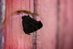 Macro shot of dark brown butterfly sitting on wooden doors on a background of brick wal. L. Romantic scene. Sadness, loneliness. The end of summer, autumn is Stock Photos