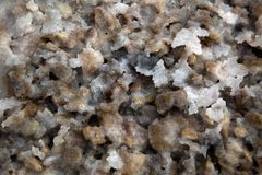 Salt of the Land. Macro shot of the Dead Sea beach, salt clusters and crystals amongst the wet land and stones Royalty Free Stock Photos