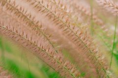 Macro shot detail of beautiful grass flower on blurred green leaves. Background for love peaceful and happy life concept. stock photos