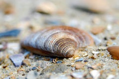 Macro shot of different shell in sand Stock Photography