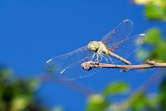 Dragonfly resting stock photos