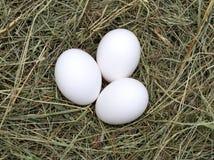 Macro shot of eggs Royalty Free Stock Photos
