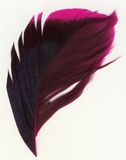 Macro shot of feather Royalty Free Stock Images
