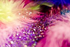 Macro shot of feather and glitter Royalty Free Stock Images
