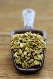 Macro shot fennel seeds, aromatic spice Royalty Free Stock Photography