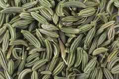 Fennel seeds. Macro shot of Fennel seeds, background royalty free stock image