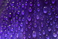 Macro shot flower leaf with waterdrops. Background wallpaper,leaf closeup  with water drops Royalty Free Stock Photos