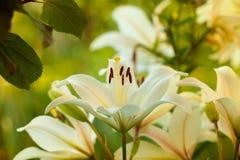 Macro shot of flower. Nature background photography. Closeup photo.  Stock Photos