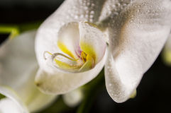 Macro. Shot of a flower with some water drops Stock Photo