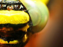 Macro shot: fragment of a dragonfly's head Royalty Free Stock Photos