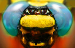 Macro shot: fragment of a dragonfly's head Royalty Free Stock Image