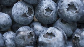 Macro shot of fresh bilberry or blueberries. Royalty Free Stock Images