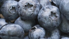 Macro shot of fresh bilberry or blueberries. Royalty Free Stock Photography